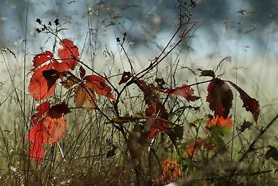 Autumn Tree Leaves Landscape Canvas Picture Poster Print Wall Art Unframed #2265