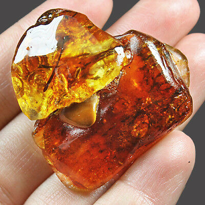 31.02g Natural Baltic FLASHING FLOWER AMBER Inclusion Collectible MSFY457