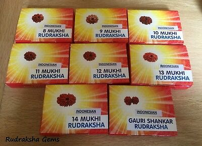 Rudraksha Java Indonesian Collector Bead 8,9,10,11,12,13,14 Mukhi Face Certified