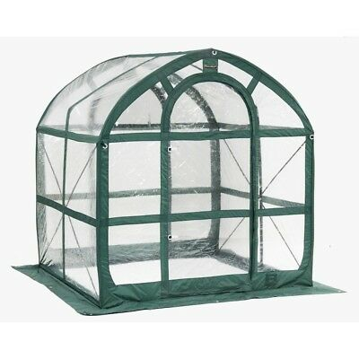 SpringHouse 6 ft. x 6 ft. PVC Pop-Up Greenhouse Portable Quick and Easy Set-up