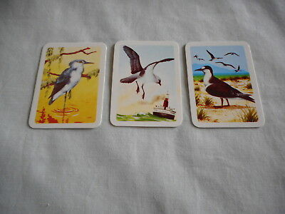 Australiana Bird Studies Collectors Cards Nos 179, 183 and 184