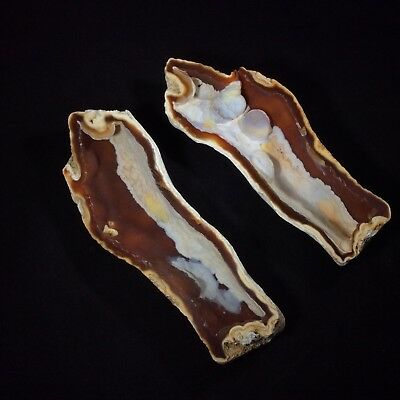 Agatized Fossil Coral Pair 180296 Tampa Bay Florida Metaphysical