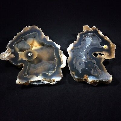 Agatized Fossil Coral Pair 180297 Tampa Bay Florida Metaphysical