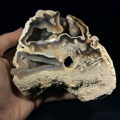 Agatized Fossil Coral 1802103 Tampa Bay Florida Metaphysical