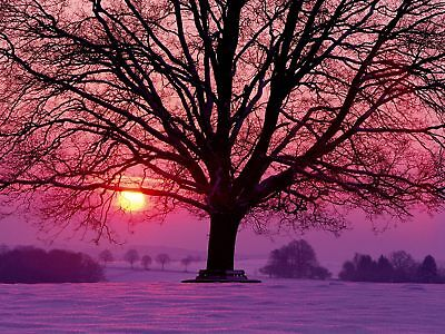 Winter Tree Purple Sunset Canvas Picture Poster Print Wall Art Unframed #A125