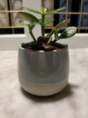 Small plant pot blue ceramic glazed 7cm round  X 3
