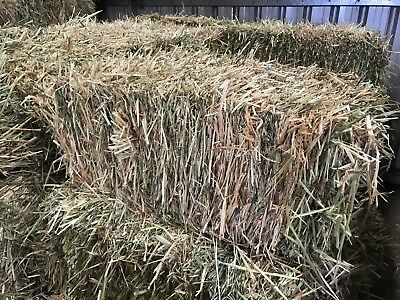 Oaten Small Square Hay Bale, Horse Feed