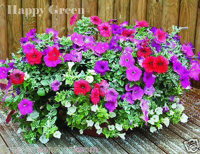 PETUNIA DWARF MIX - 1000 seeds - PETUNIA HYBRIDA NANA - Suitable for containers