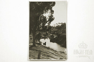 C1920's RARE REAL PHOTO POSTCARD GERHARD GRAUE VIEW OF TANUNDA BAROSSA VALLEY
