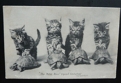"Vintage Cat Postcard- Kittens with Tortoise "" The Motor race"" Speed Limitations"