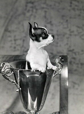 Vintg Photo~Cute Chihuahua Puppy Dog Sits in Silver Cup~NEW Large Note Cards
