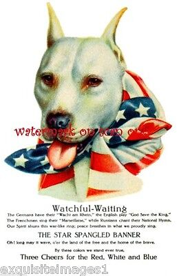 1915 Wallace Robinson~WW1 Military~Staffordshire~Pitbull Terrier, NEW Note Cards