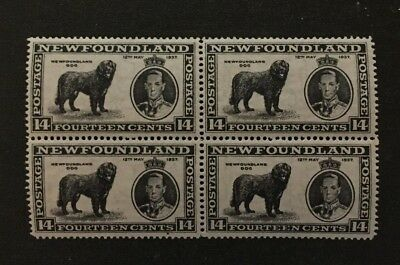 Newfoundland Stamp #238v Two Male Dogs in Block MNH  $224