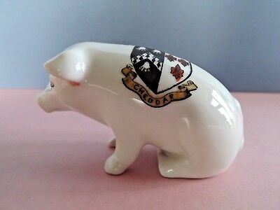 Czech Crested China Pig  - Cheddar Crest (74,281)