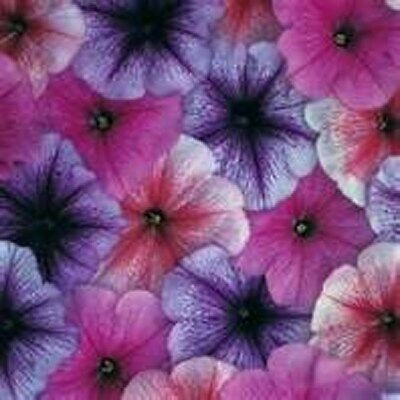 Petunia- Veigned  Mix- 100 Seeds- BOGO 50% off SALE