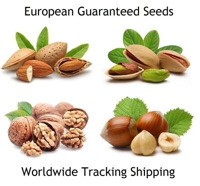 European  Almond - Hazelnut - Pistachio - Walnut  **Guaranteed Tree Seeds**