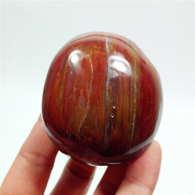 "2.2""168g Polished PETRIFIED WOOD Fossil Agate Palm Stone Healing Madagascar Y310"