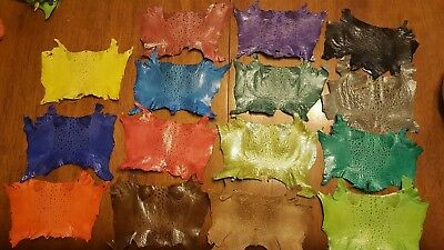 """New Bufo Marinus Cane Toad Skin Leather set of 15 Collectible Taxidermy 6"""""""
