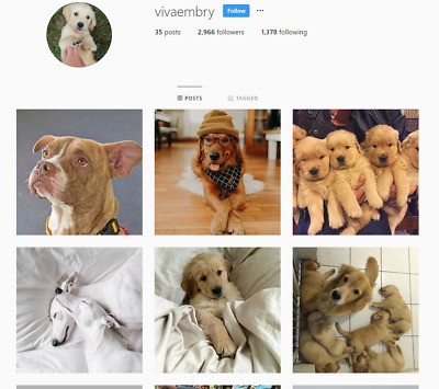 Instagram Account real 1K+ | Dogs