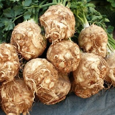 Vegetable Celeriac Giant Prague 4000 Finest Seeds #4043