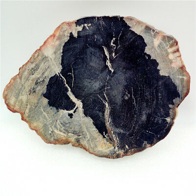 "4.9""345g Polished PETRIFIED WOOD  FOSSIL AGATE SLICE DISPLAY Madagascar Y671"