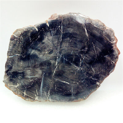 "5.2""560g Polished PETRIFIED WOOD  FOSSIL AGATE SLICE DISPLAY Madagascar Y675"