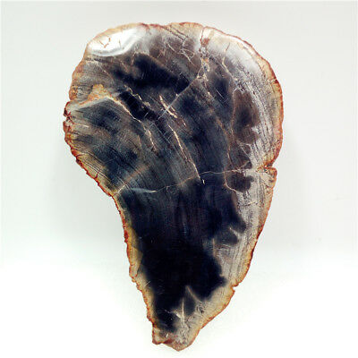 "4.6""195g Polished PETRIFIED WOOD  FOSSIL AGATE SLICE DISPLAY Madagascar Y677"
