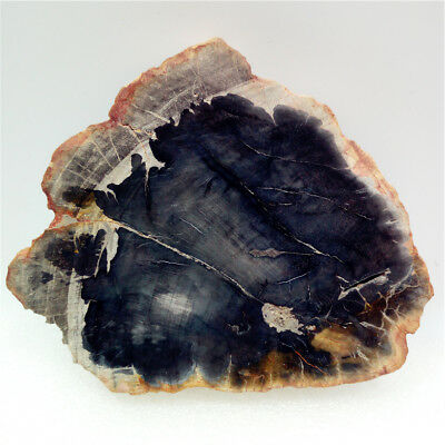 "4""222g Polished PETRIFIED WOOD  FOSSIL AGATE SLICE DISPLAY Madagascar Y678"