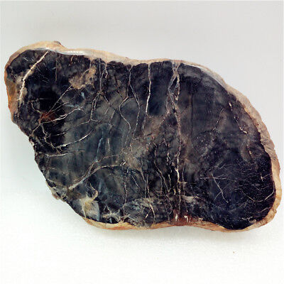 "5.3""340g Polished PETRIFIED WOOD  FOSSIL AGATE SLICE DISPLAY Madagascar Y676"