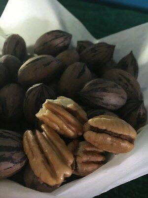Pecan Nuts 500g - Fresh nut in shell new season beautiful flavour