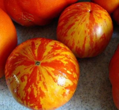 Vegetable Tomato Red Zebra (Improved) 60 Finest Seeds #4122