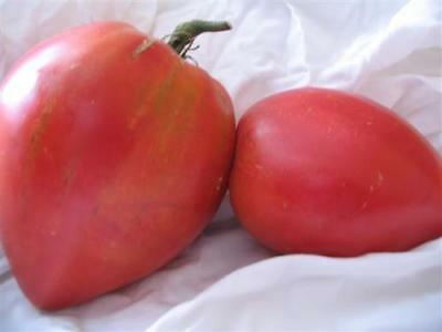 Vegetable Tomato Anna Russian 100 Finest Seeds #4110