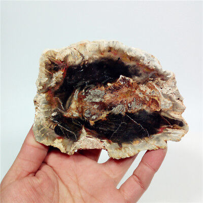 "4.5""310g Polished PETRIFIED WOOD  FOSSIL AGATE SLICE DISPLAY Madagascar Y534"