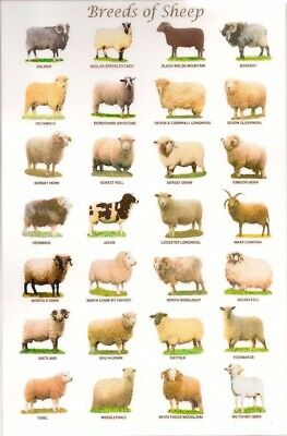 "Breeds of sheep Fabric poster 20x13 / 36x24"" Decor 01"