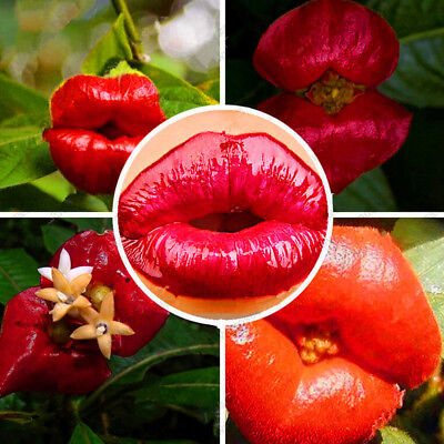 100X Red Lip Flower Seeds Rare Plant Ornamental Garden Potted Garden Decor