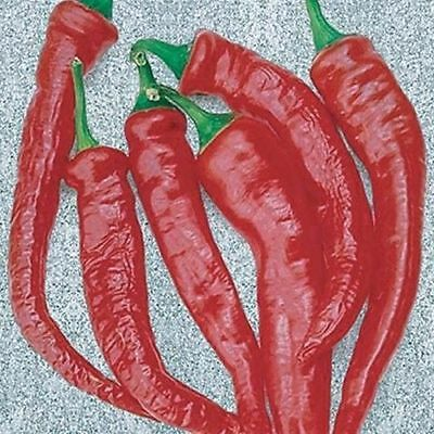 Vegetable Hot Chilli Pepper Cayenne Thick 100 Finest Seeds #4197