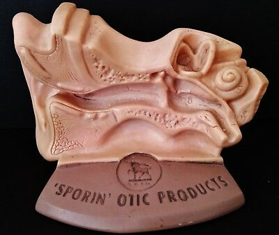 VINTAGE SPORIN OTIC PRODUCTS Advertising Display Medical Model HUMAN EAR CANAL