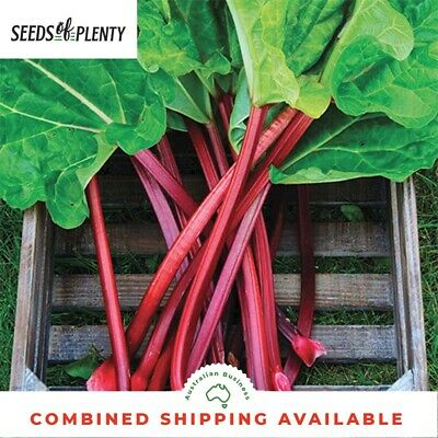 RHUBARB - Giant Victorian (100 Seeds) EUROPEAN HEIRLOOM VARIETY Bulk