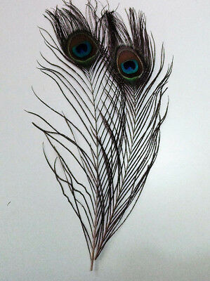 Natural Peacock Eye Feathers for Fly Tying, 28 - 30cm in length