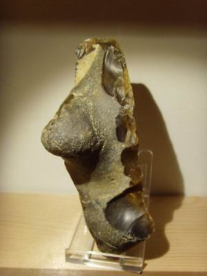 Palaeolithic -  Super, large  'Acheulian' side chopper - 350,000 yrs.