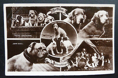 Vintage Multiview Dog Postcard- Bull Dogs/Collies/Setters