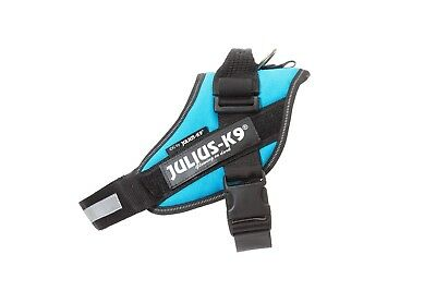 Julius-K9 IDC Powerharness AQUAMARINE Adjustable puppy harness