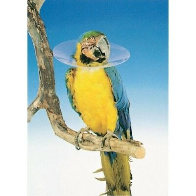 Protective Collar 14cm Post-Op | Feather Plucking Parrot Elizabethan Bird  cone