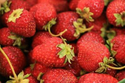 Vegetable Strawberry Four Seasons 100 Finest Seeds #4064