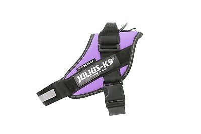 Julius-K9 IDC Powerharness PURPLE Adjustable puppy harness