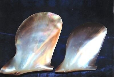 """TWO (2) 7 to 8"""" MOTHER OF PEARL BROWN  LIP OYSTER SEA SHELLS BEACH DECOR TROPICS"""