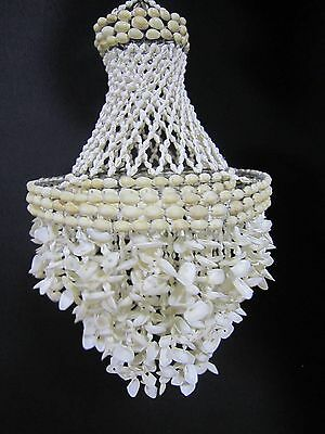 Decorative Shell Chandelier