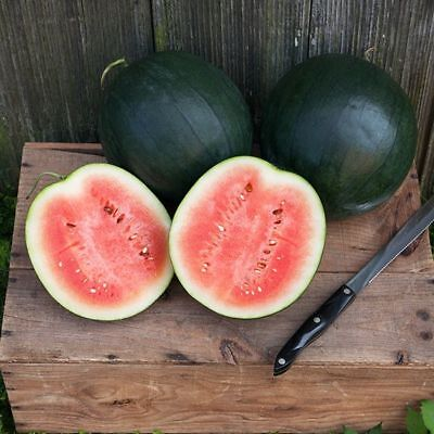 Vegetable Water Melon Sugar Baby 20 Finest Seeds #4337