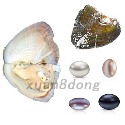1pc/5pcs/10pcs Individually Wrapped Oysters with Large Round Pearl Birthday Gift