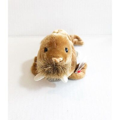 Ty Beanie Babies 1999 Paul Brown Walrus Tag Excellent   PE